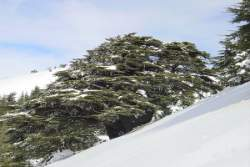 Barouk Cedars Natural Reserve Covered by the Snow